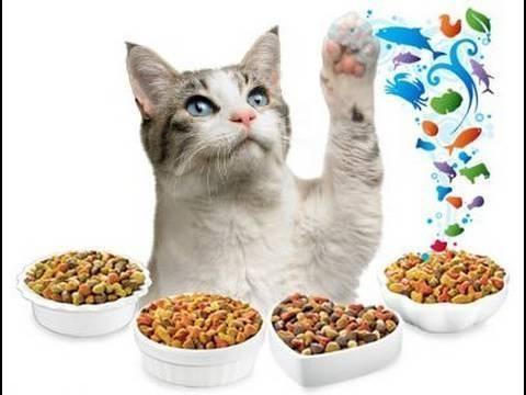 Кот среди мисок с разным кормом