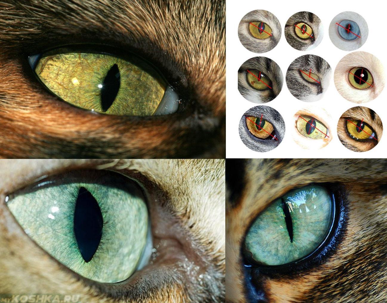 этого картинка глаз человека и кота про секс