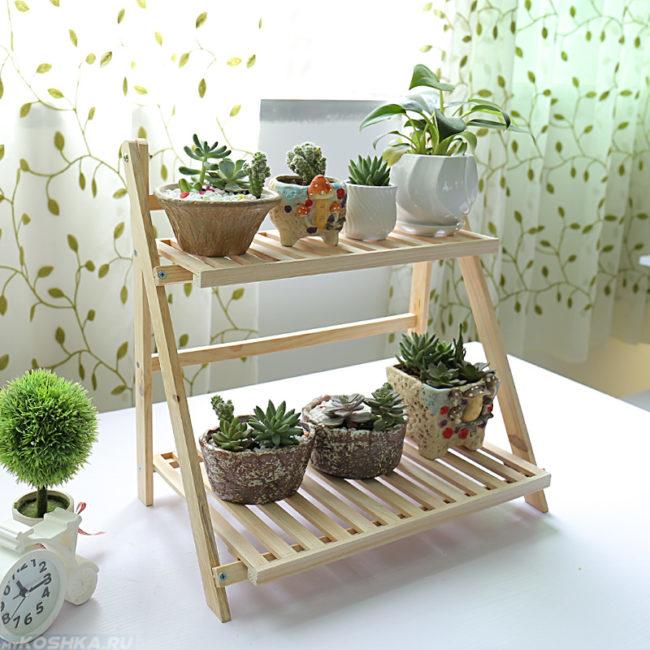 Зеленые растения в горшках на деревянной полке стоящей на столе
