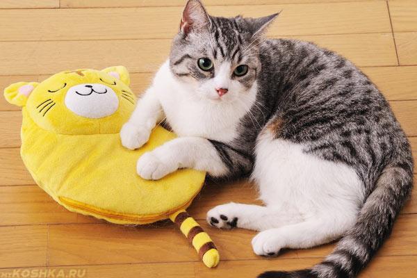 Кошка лежит на желтой грелке