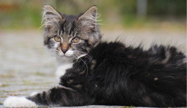 Грязная кошка в катушках смотрит в объектив