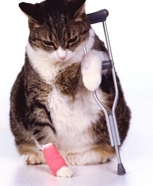 Разноцветный кот с костылем