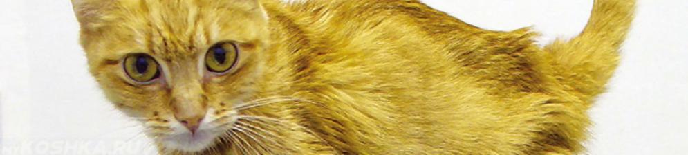 Хроническая почечная недостаточность у кошки