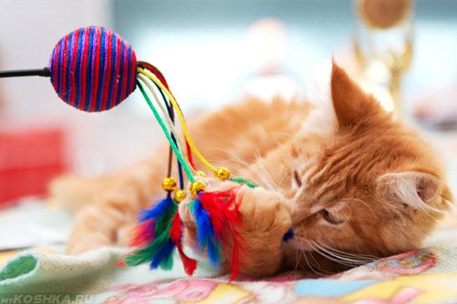 Рыжий пушистый котенок и разноцветная игрушка