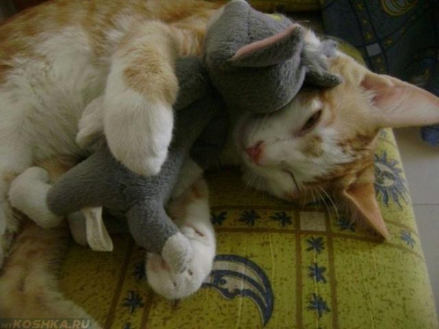 Кошка лежит в обнимку с игрушкой на своей лежанке