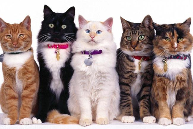 Пять разных кошек с ошейниками