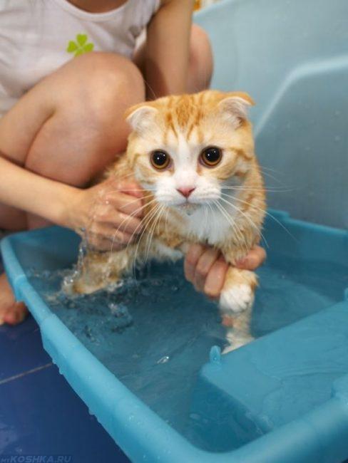 Рыжую кошку купают в тазике