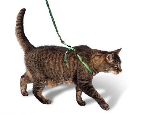 Кот гуляет в шлейке восьмерке