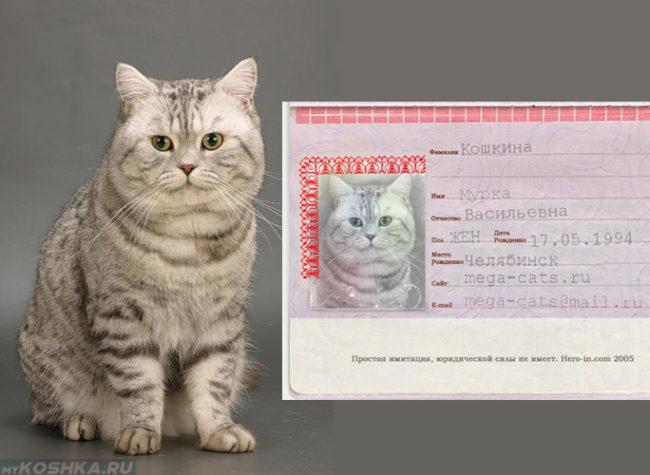 Кошка с именным паспортом