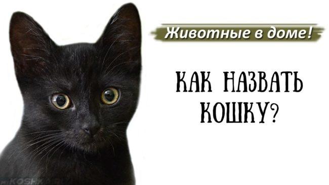 Черный кот и надпись как назвать кошку