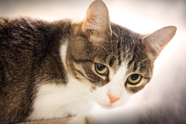 Разноцветный кот грустно смотрит в камеру