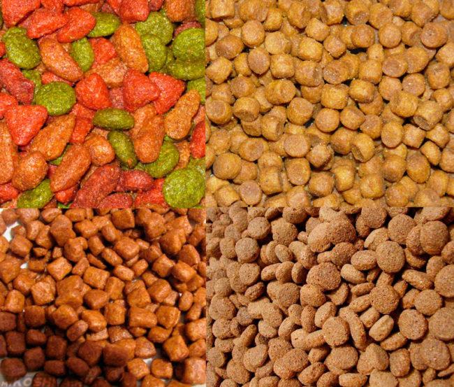Разнообразие кошачьих кормов