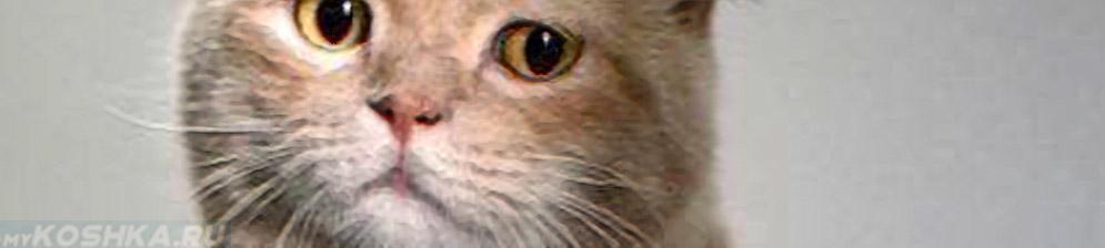 Кошка с больным видом