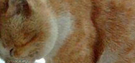 Кошка страдает от болезни Альцгеймера уперлась лбом