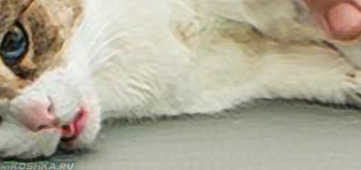 Кошка больная перитонитом
