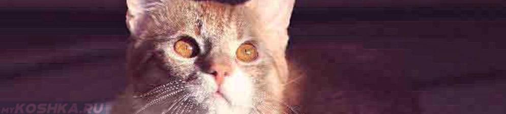 Кошка больная энтероколитом