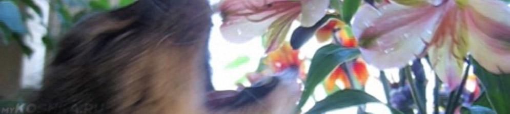 Кошка ест цветок из цветочного горшка