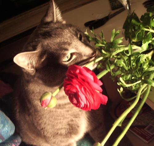 Кошка пробует съесть цветок из горшка