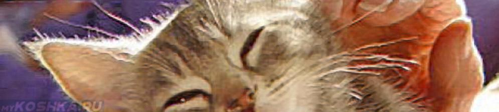 Кошка мурчит от удовольствия при ласках человека