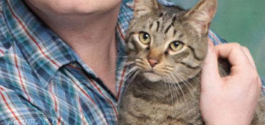 Кошка на руках у человека