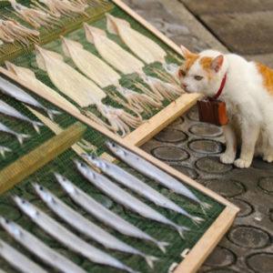 Кошка смотрит на рыбу на прилавке