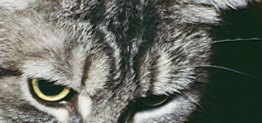 Короновирусный энтерит у кошки вблизи