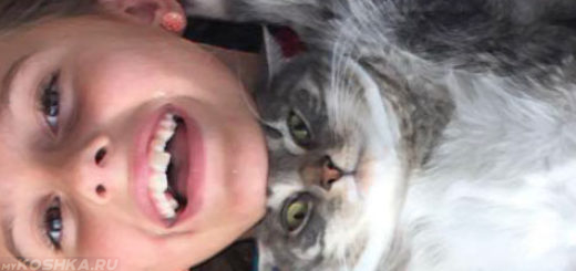 Кошка лежит на груди у ребёнка