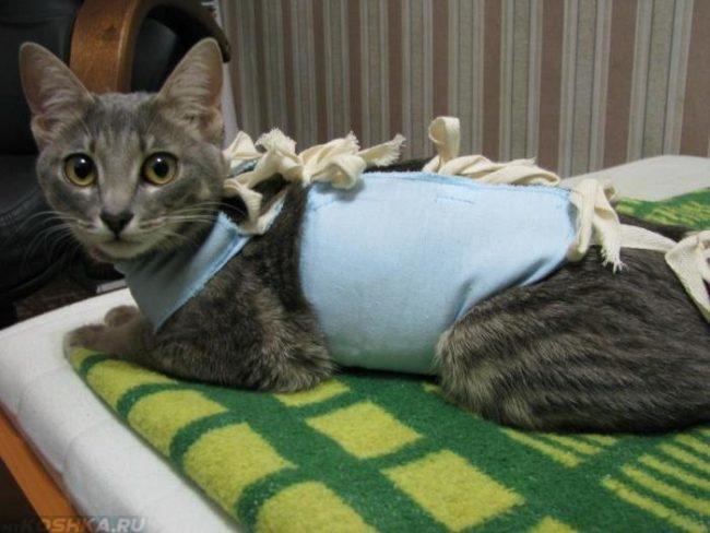 Серая кошка в попоне на зеленом покрывале