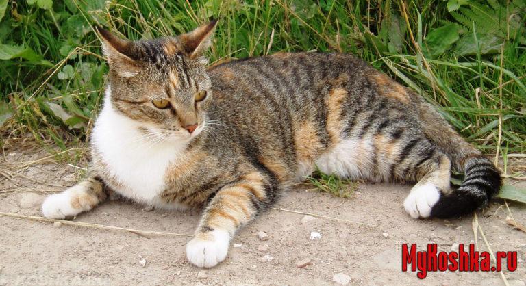 села размыла во сне кошка нападает приснилось много свеклы