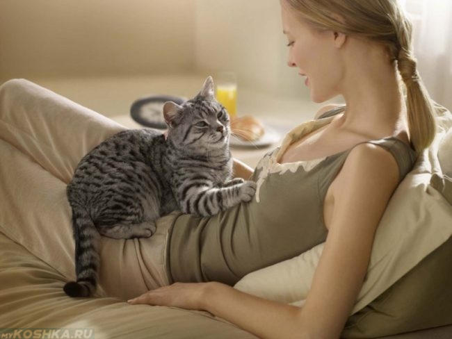 Серая полосатая кошка на животе хозяйки