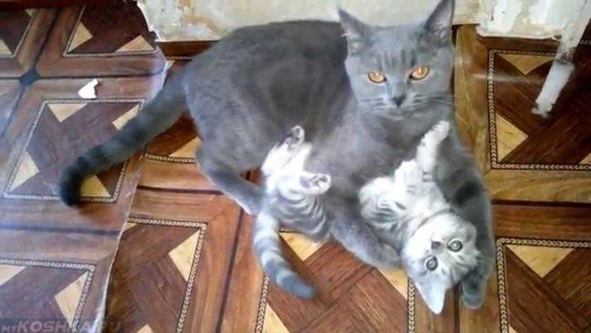 Серая кошка лежит на полу обняв лапами своего серого котенка
