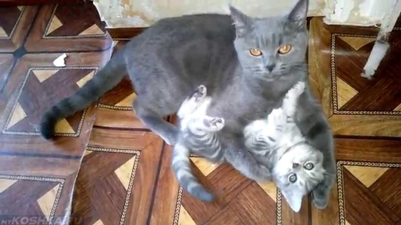 Скачать котиков фотки 5