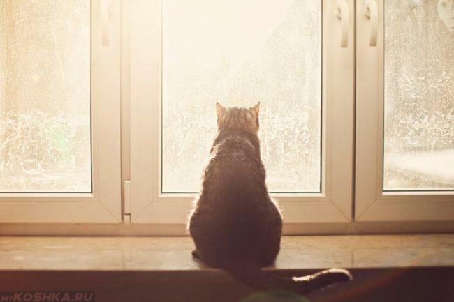 Кошка смотрит в окно на балконе