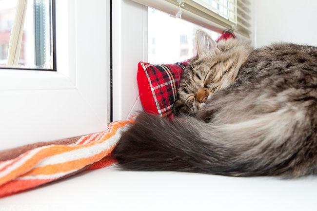 Кот спит на подушке на окне