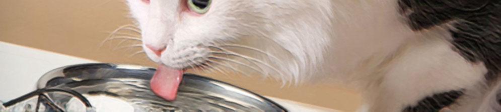 Кошка пьёт воду из миски