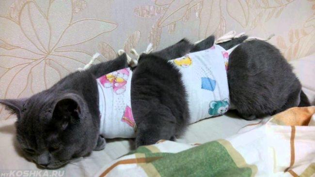 Серая кошка обмотанная в ткань после операции