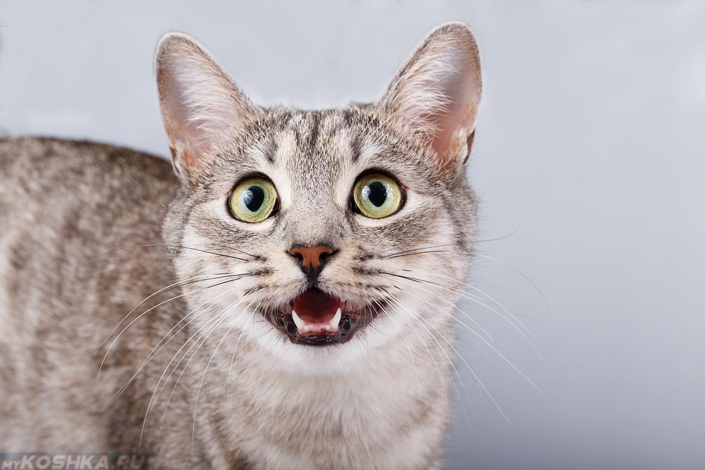 У кота твёрдый живот и не ест