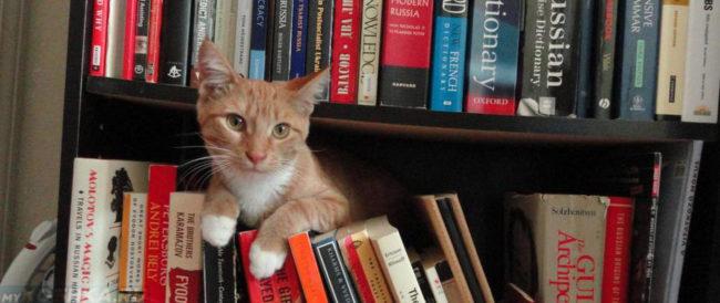 Кошка прячется в квартире на книжной полке
