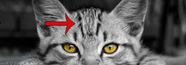 Кошка с буквой М на голове