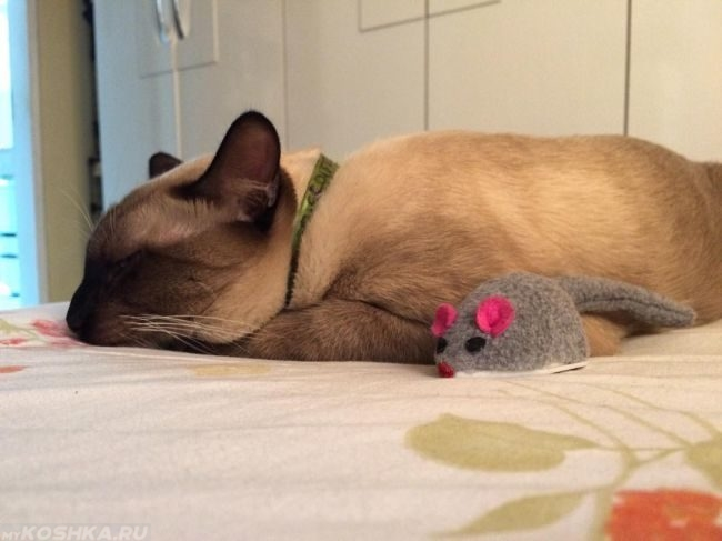 Сиамская кошка лежит с игрушечной мышкой на кровати