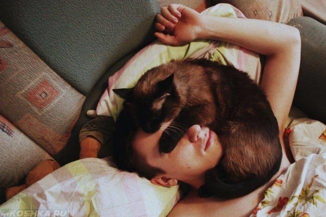 Коричневая кошка на лице своего хозяина