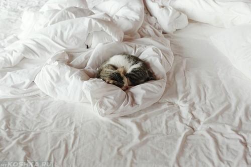 Кошка спит на белых простынях постели её хозяина