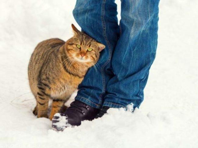 Кошка трётся об ноги человека зимой