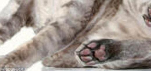 Кошка волочит задние лапы