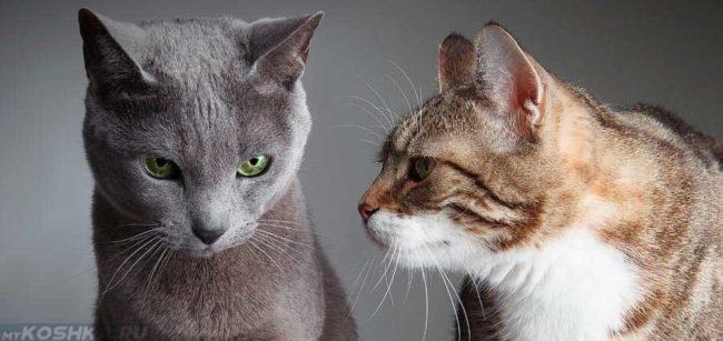 Серый кот и коричневая кошка