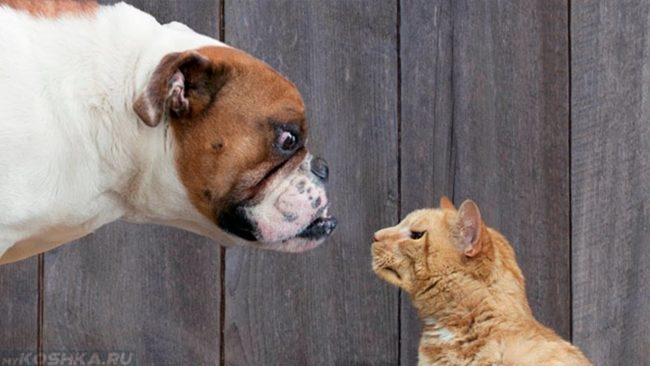 Кошка встретилась лицом к лицу с собакой