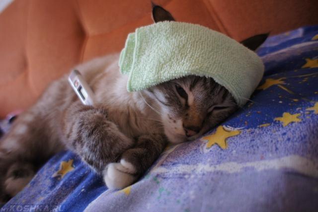 Кошка лежит с градусником и повязкой на лбу