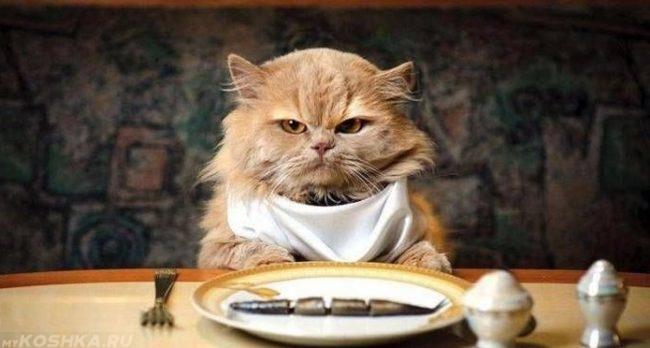 Рыжий кот с платком за столом перед тарелкой с рыбой