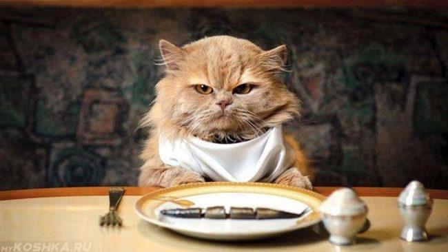 Рыжий кот сидит за столом