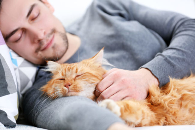 Рыжий пушистый кот лежит на руке хозяина